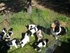05-i-cuccioli
