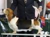 DYLAN DOG TERRA D'ORFILI