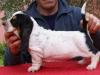 12-i-cuccioli-03b